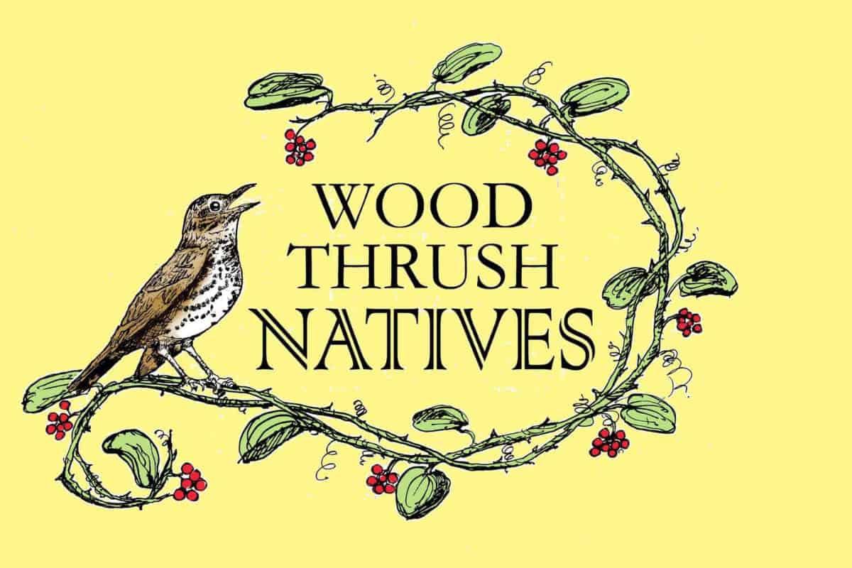 Wood Thrush Natives Logo